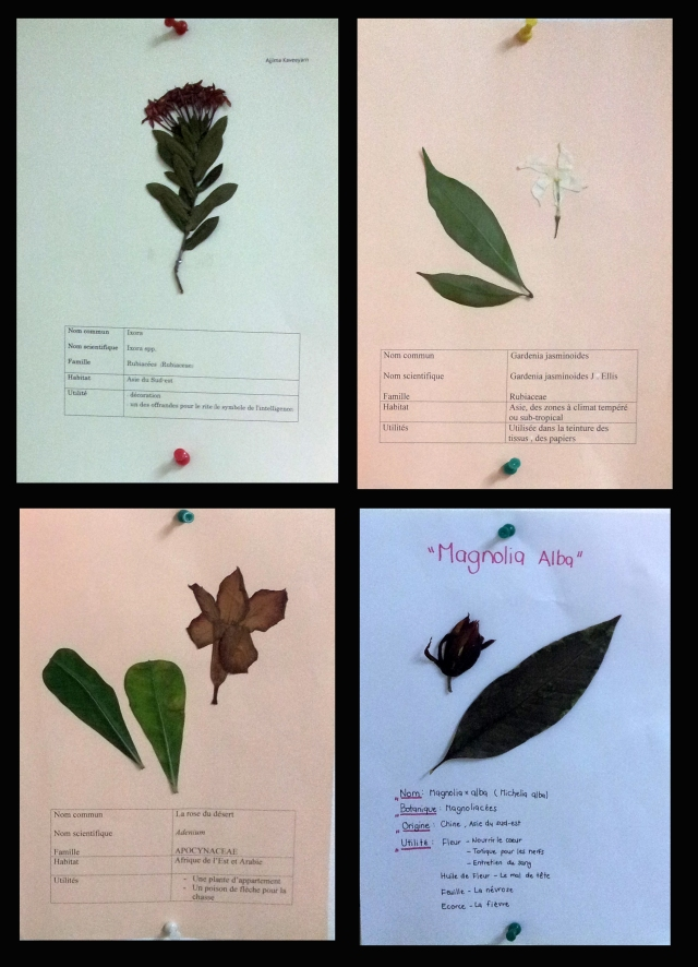 herbier
